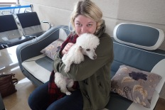Scampy airport poodles for the win!